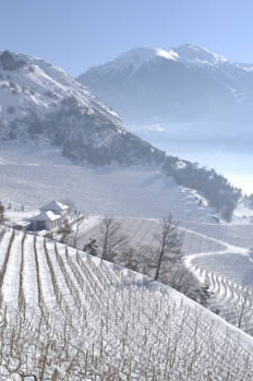 Domaine Rouvinez, Valais