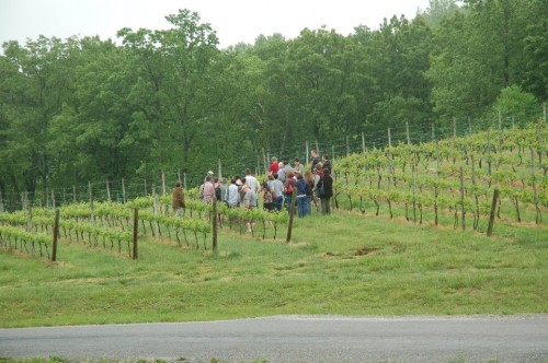 Tastecampers at Linden Vineyards