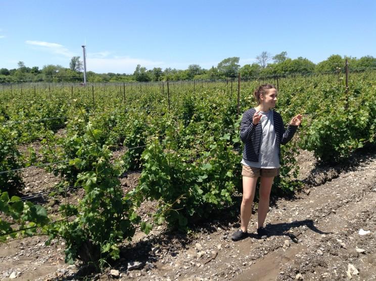 Maggie dans les vignes de Grange of Prince Edward