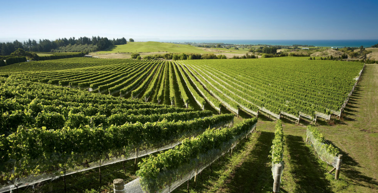 Vignoble de The Supernatural (Photo: http://www.andco.co.nz/)